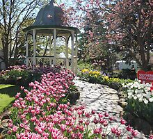 Tulip Time Bowral by JP-Photos