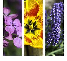 Flower triptych by maiemy