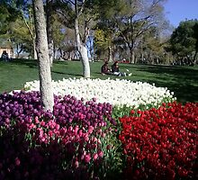 The tulips in the park,Konya by rasim1