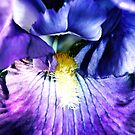 Inside Iris by Polly Peacock