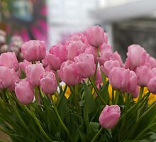 Pink tulips at the RHS Chelsea Flower Show by Keith Larby