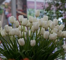 White tulips at the RHS Chelsea Flower Show by Keith Larby
