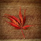 Japanese Maple by ClaireBear