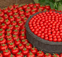 Waitrose Tomatoes on display at the  RHS Chelsea Flower Show by Keith Larby