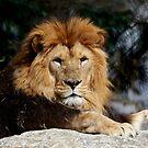 The King by annalisa bianchetti
