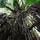Roots - The Cathedral Fig - Atherton Tableland by john  Lenagan