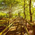 Summer Boardwalk by mhfore