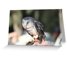 Who Hoo? Greeting Card