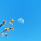 Daytime Moon by Susan S. Kline