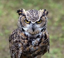 Portrait of a Bengal eagle-owl by John Gaffen