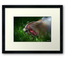 Gracie and the daisy  Framed Print