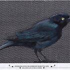 Blackbird on Black by paulapaints