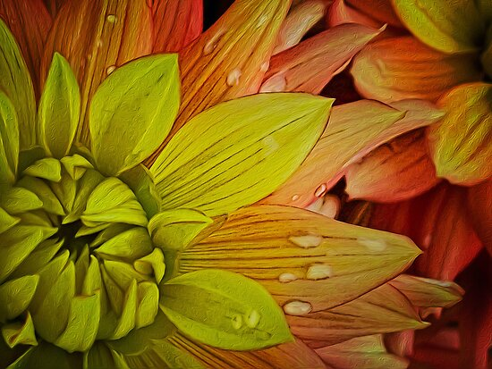 Stylized dahlia by Celeste Mookherjee