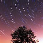 Star Trail Tree by Cat Perkinton
