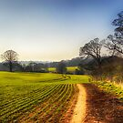 Peace in the Countryside by Vicki Field