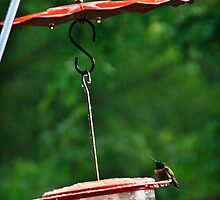 swingin in the rain  by KSKphotography