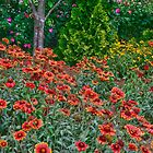 Flower Bed by Herb Spickard