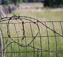 OLD BARBED WIRE FENCE by Pauline Evans