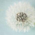 dandelion dream by Nicola  Pearson