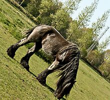 Belgian Draft Horse grazing  by Cynthia Swinnen