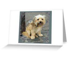 Louie the Shorkie-Tzu : Shih Tzu Yorkshire Terrier (Yorkie) Mix Greeting Card