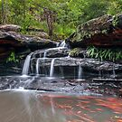 Moores Creek by vilaro Images