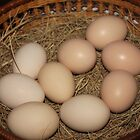 Thank you for our daily eggs... by Maree  Clarkson