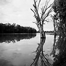 Murray River, Euston by Linda Lees