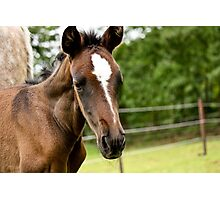 Andalusian Colt 2 Photographic Print