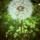 Make a Wish by Olivia Joy StClaire
