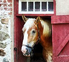 Palomino by Barn Door by Susan Savad