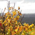 Autumn Vines - Denmark WA by pennyswork