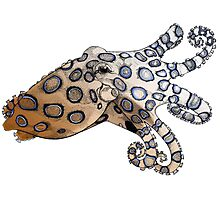 Blue-Ringed Octopus Color Photographic Print