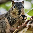 Even the squirrels visit the park by Keala