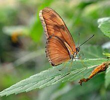 Resting Butterfly by StusPlaice