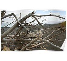Driftwood on Black Sand Poster