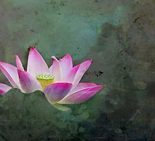 Mystical Lotus by jasonksleung