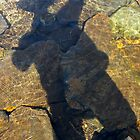 Swimming Shadow by Matthew Eakin