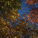 Seasonal Beauty by Martice