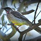 Honey Eater by Lozzar Landscape