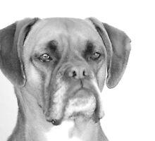 Boxer Dog by henkiepenkie