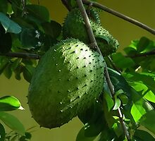 GUYABANO, THE SOURSOP FRUIT - Cancer Remedy-THROW PILLOW by ╰⊰✿ℒᵒᶹᵉ Bonita✿⊱╮ Lalonde✿⊱╮