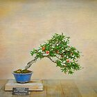 Pomegranate Beauty by Marilyn Cornwell