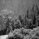 Yosemite National Park by possumhollow