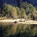 Stream through Yosemite by possumhollow