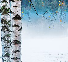 Birches in the mist by Silvia Ganora