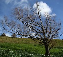 Tree on Mt. Hobson by davidandmandy