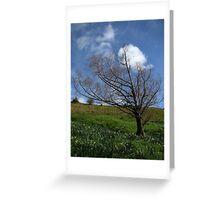 Tree on Mt. Hobson Greeting Card