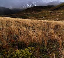 Tongariro Wilds by davidandmandy