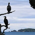 Perched On Whangaparaoa by davidandmandy